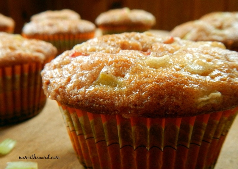 Rhubarb Muffins close up of muffins fresh out of the oven ready to eat!