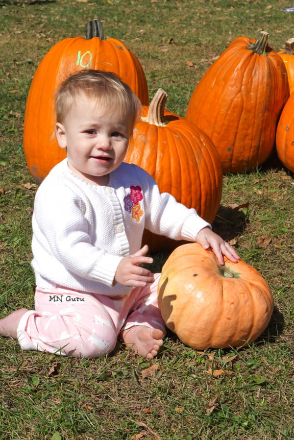 Toddler in pumpkin patch